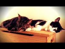 Warning: This Blog May Contain Cats!